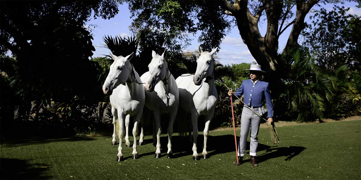 caballos-pura-raza-Nicaragua-
